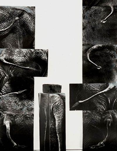 XXXVIII - ´ Ein Elefantenschwanz-zu dumm-kann keine Fliege erreichen´