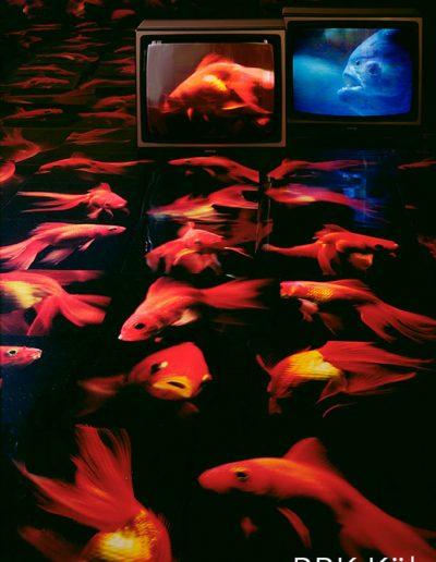 XXXV -´Frisch Fisch frisst Fisch´