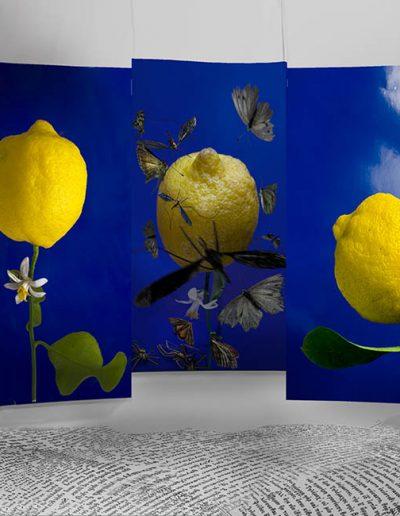 Lemonen-Zitronen